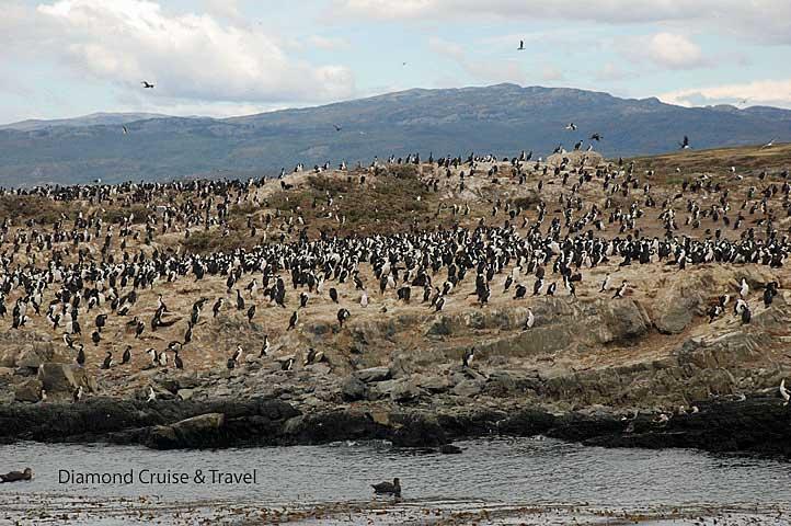Cormorants on the shore.