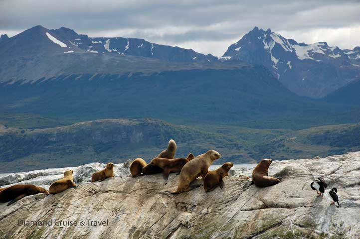 Sea lions resting on a rock.